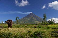 Vulkan Mayon / Philippines, 2014